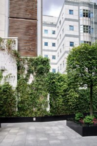 Green Wall System Drapers Garden London
