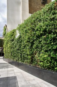 Green Wall System London Drapers Garden