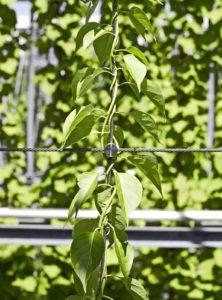 Greening Ropes