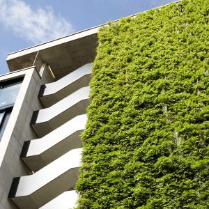 Green Walls – delivering aesthetic, ecological and economical benefits